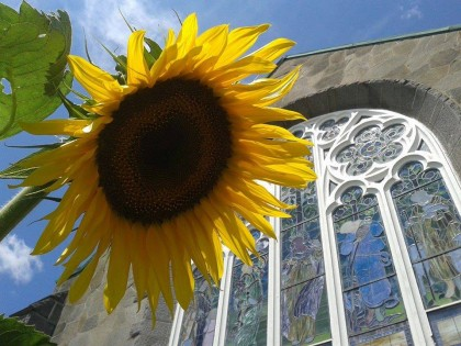 sunflower and church