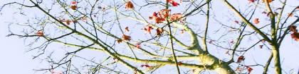 forests-fields-header-6333-800x200