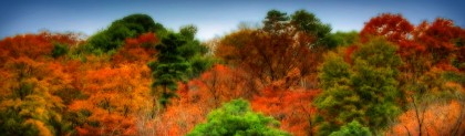 autumn-forest-trees-blog-header
