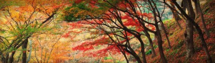 beautiful-autumn-forest-trees-website-header